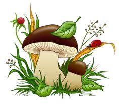 champignons,mushroom,Pilz,seta,cogumelo