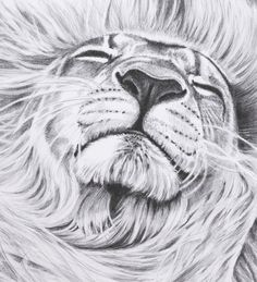 8 x 10 Print of Original Lion Pencil Drawing by roxy5235 on Etsy, $19.99