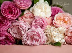 Оказывается много людей знают и читают наш блог и любуются нашими розами.  За последние несколько месяцев (а особенно дней) я услышала (пр...