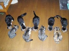 Organized Cats of an OCD owner,  Terribly Cute