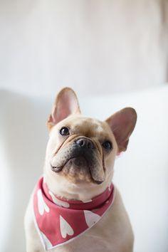 DIY: Valentine's Day Dog Bandana