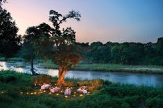 Dining under the stars on the bank of the Sabie River in the Kruger National Park, Lion Sands Game Reserve, South Africa ✯ ωнιмѕу ѕαη∂у Sand Game, Safari Wedding, Magical Tree, Game Lodge, River Lodge, Private Games, Kruger National Park, Game Reserve, In The Tree