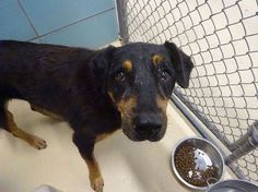 NEEDS OUT BY 7/26!! Sweet, scared and abandoned: Annabeth is a darling senior girl in a kill shelter