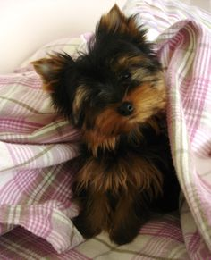 Kaylee, my Yorkie  We're inviting you to join us: https://www.facebook.com/alexandrawow101