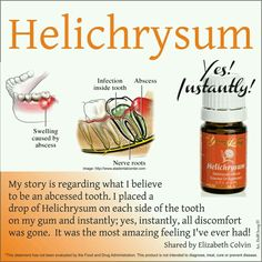 1000 Images About Helichrysum Young Living On Pinterest