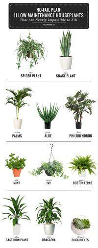 11 Easy To Grow Houseplants | palms + cast iron plants