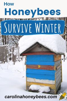 Winter survival for honey bees. Learn how bees survive the cold months of winter - snug inside the beehive. #carolinahoneybees