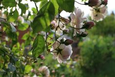 Trending on Gardenista: Fragrant Gardens and Floral Fabrics: Remodelista