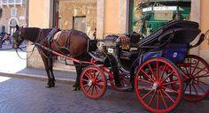 Aiutaci a difendere i cavalli delle botticelle romane: firma la petizione!