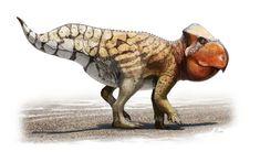 Udanoceratops (что означает «рогатая морда из Удан-Сайр») — это вымерший род из семейства Leptoceratopsidae инфраотряда цератопсы. Он жил в конце