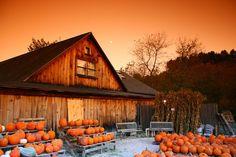 Autumn Morn