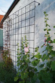 Välkommen in i vår trädgård! Pergolan som maken byggt vid entrén har nu pyntats med vinrankans vackra blad. På baksidan växer en klematis och på andra sidan en rosa ros, som sakta men säkert börjar...