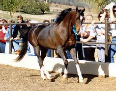 Khemosabi++++// (May 14, 1967 - March 1, 2001).  I thought he was one of the most beautiful horses I'd ever seen.  One of my acquaintances in the model horse community got to spend time with him shortly before he died and said he was just as beautiful inside as out.