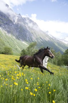Just Beautiful:) Horses, heste, grass, flowers, animal, mountain, clouds, beauty, beautiful, gorgeous, photo