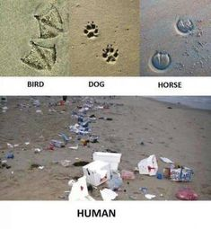 Funny pictures about Animal Footprints. Oh, and cool pics about Animal Footprints. Also, Animal Footprints photos. Save Planet Earth, Save Our Earth, Our Planet, Save The Planet, Animal Footprints, Horse And Human, The Ugly Truth, Mother Earth, Planets