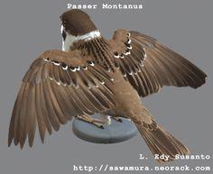 CGTalk - Passer Montanus