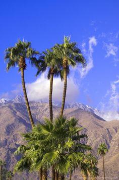 San Jacinto Peak Mountains, Palm Springs, Riverside, California by Michael DeFreitas