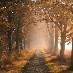A beautiful path; we can imagine it leads to wherever our heart desires.