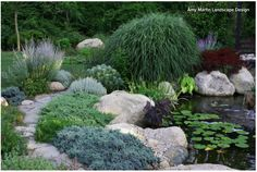 Matisse Garden Pond Walkway. Creeping Juniper: How to use it. This shrub is particularly effective in the winter garden; combine it with boulders in naturalistic open areas or use it to stabilize slopes.   It also makes a good addition to small ponds or water features and combines well with other low junipers, such as dwarf Japanese garden juniper (Juniperus procumbens 'Nana'), and perennials with contrasting forms, like iris or hosta.