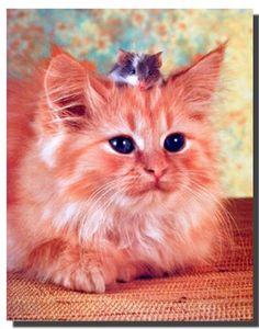 Absolutely Wow! This best friend's cute cat with mouse art print poster offers new style and glace to your decor. It will be a great addition for any home decor and ensures high quality with perfect color accuracy. What are you waiting for grab this charming poster and enjoy your surroundings.