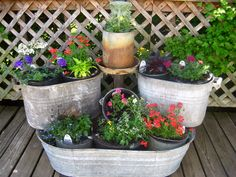 25 Lovely Container Plants Garden Ideas For Home Front Yard Decoration Types Of Strawberries, Strawberry Plants, Fall Flower Pots, Flower Planters, Garden Planters, Unusual Flowers, Beautiful Flowers, Container Plants, Container Gardening