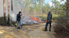 Volunteers assist with Prescribed Burn November 2012. Image by Sr Curator R. Stafne