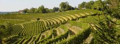 A Wine Tourist's Guide to South-West France