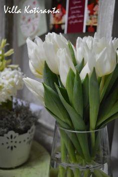 Valkoiset tulppaanit jouluksi / White tulips for Christmas White Tulips, Christmas Table Settings, Christmas Home, Flower Arrangements, Flowers, Plants, Floral Arrangements, Plant, Royal Icing Flowers