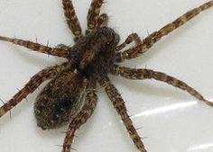 Вот почему нельзя убивать пауков в доме!