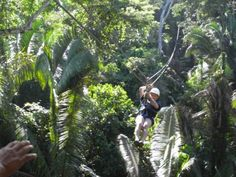 Ziplining over and through the jungle canopy in Belize at Jaguar Paw. www.chukkacaribbe...