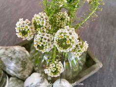 Reise durch den Advent - Deko Plants, Hammer And Chisel, Small Glass Vases, Bon Voyage, Potted Plants, Celebration, Planters, Plant, Planting