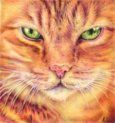Ginger Cat - ballpoint pen by margaritafelis.deviantart.com on @DeviantArt