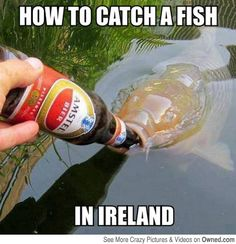 Funny 2014 How to Catch A Fish in Ireland. enjoy the best of lol and funniest meme and humor from here. Funny 2014 How to Catch A Fish in Ireland Funny Dog Photos, Funny Dog Videos, Funny Animal Pictures, Funny Animals, Funny Images, Hilarious Pictures, Funny Captions, Funny Jokes, Funniest Jokes