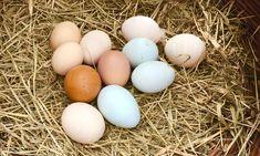 Zemiakový chlieb z droždia – moje malé veľké radosti Eggs, Food, Essen, Egg, Meals, Yemek, Egg As Food, Eten