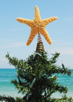 Christmas at the Beach!