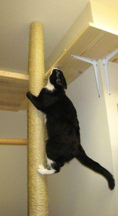 cat Diy Decorating diy home decor Diy Cat Scratching Post, Cat Heaven, Cat Run, Cat Perch, Cat Towers, Gatos Cats, Cat Playground, Cat Climbing, Cat Scratcher