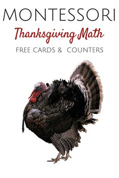 Check out this Montessori Thanksgiving Math Freebie!