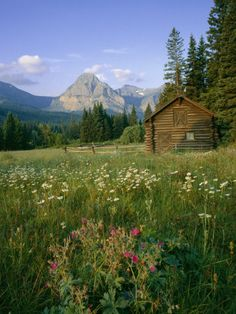 Old Park Service cabin in the Cut Bank Valley of Glacier National Park in Montana.  Most of the old cabins in the wilderness areas of Montana can be rented for pennies a day!  Rent is cheap because you have to hike to all of them!  :)
