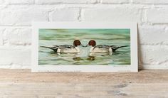 It's today in Signed, limited ed prints I'll just keep Herefordshire, Ducks, Polaroid Film, Frame, Prints, Painting, Art, Picture Frame, Art Background