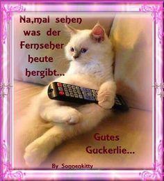 Uff Endlich Feierabend Foto Bild Tiere Haustiere Katzen