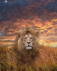 Wildlife Nature, Nature Animals, Animals And Pets, Cute Animals, Wild Animals, Funny Animals, Beautiful Series, Beautiful Cats, Animals Beautiful