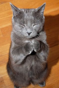Praying like this with my cat