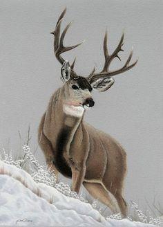 Wildlife Paintings, Wildlife Art, Animal Paintings, Animal Drawings, Deer Paintings, Whitetail Deer Pictures, Deer Photos, Mule Deer Buck, Deer Drawing