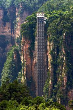 удивительное в природе