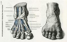 Картинки по запросу пластическая анатомия
