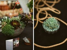 Succulent details by Lila B at Viansa Winery by Sonoma wedding photographer, Tinywater Photography