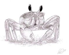 Crab Tattoo Sketch