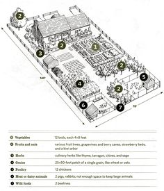 Quarter of an Acre Homestead Layout