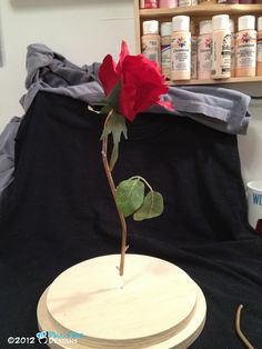 Creating the Beauty and the Beast Floating Rose