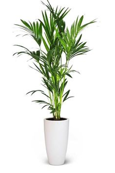 14c6aebc92ccb6c1bc2a45b166ed05d9 House Plant Ze on house chemicals, house people, house stars, house vines, house candy, house gifts, house ferns, house design, house nature, house rodents, house decorations, house family, house slugs, house fire, house home, house cars, house flowers, house mites, house crafts, house plans,